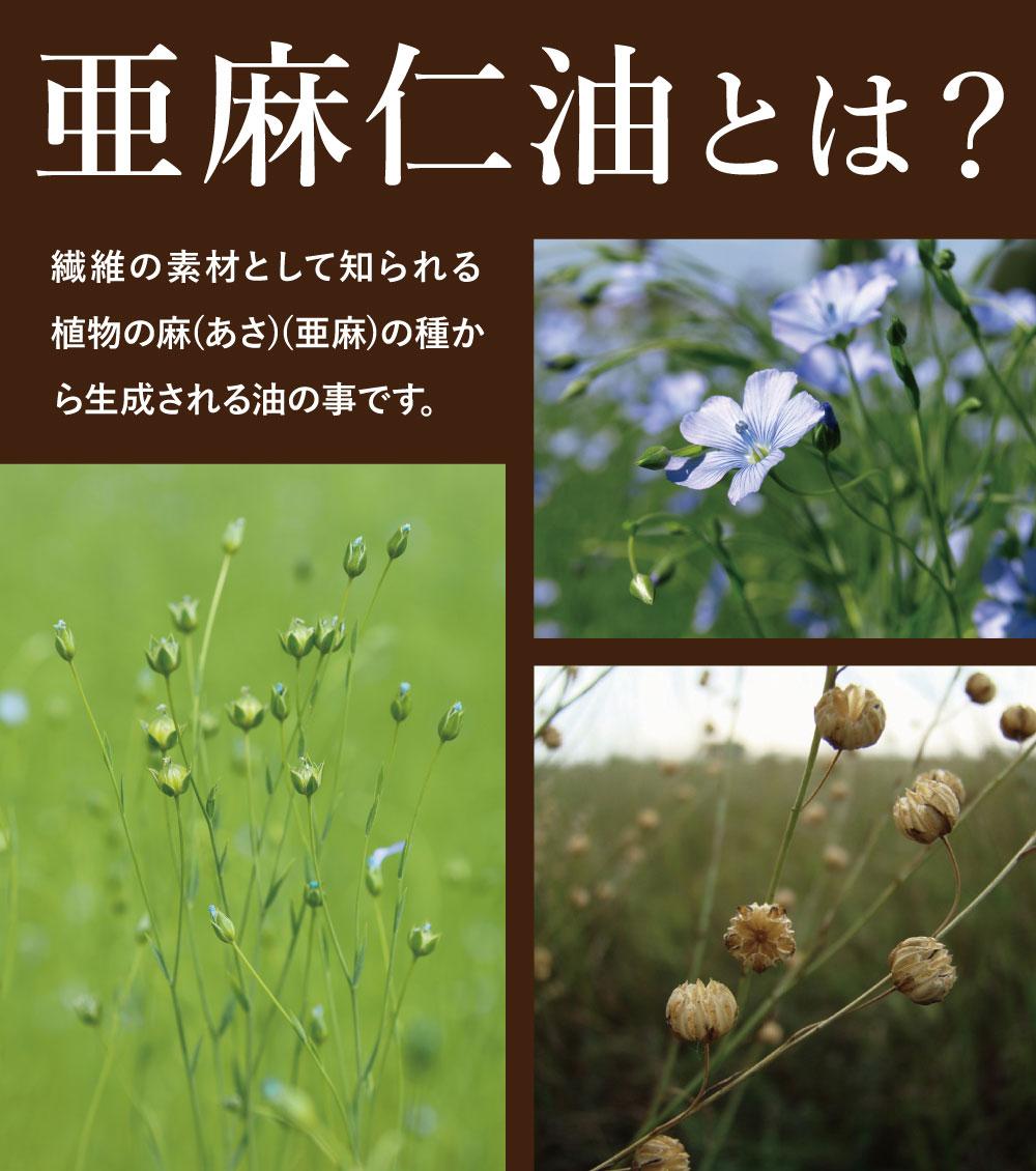亜麻仁油とは?繊維の素材として知られる植物の麻(あさ)(亜麻)の種から生成される油の事です。
