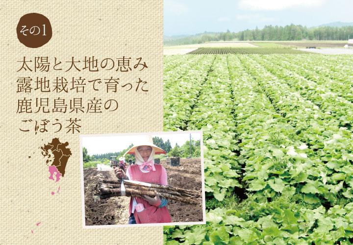 太陽と大地の恵み。露地栽培で育った九州産のごぼう茶
